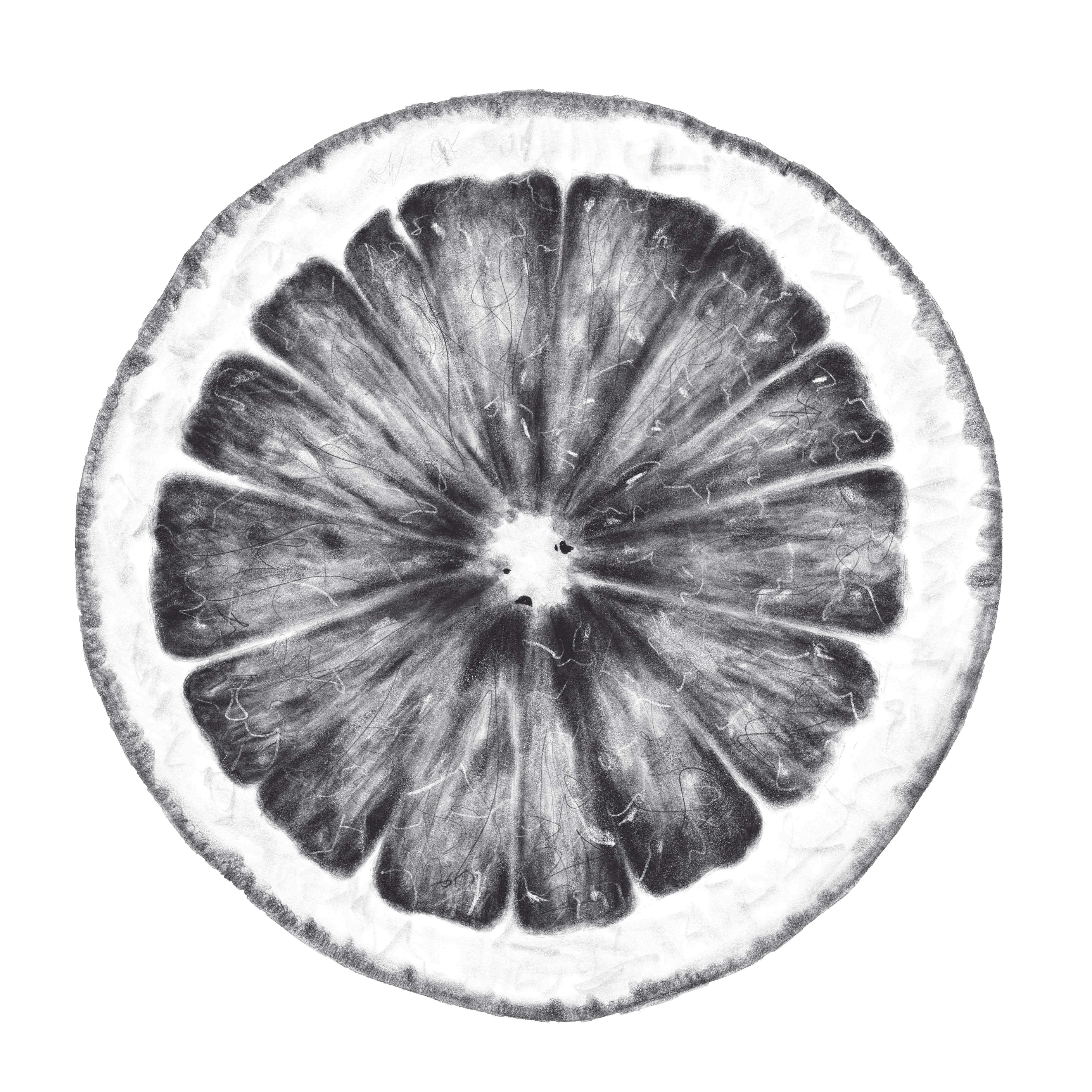 orange slice illustration